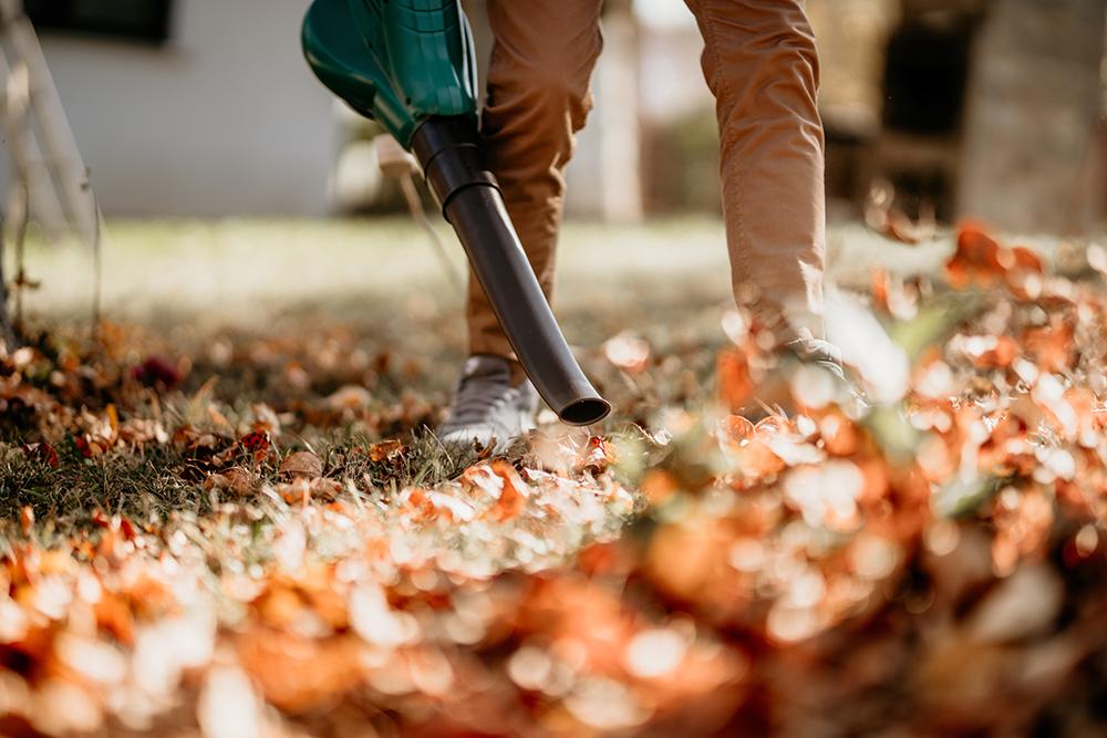 Autumn Gardening